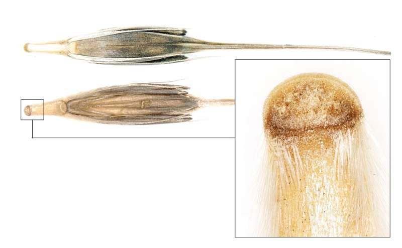Anthropogenic seed dispersal: rethinking the origins of plant domestication