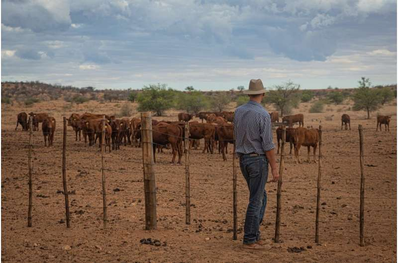 Avoiding cheetah hangouts helps ranchers protect calves