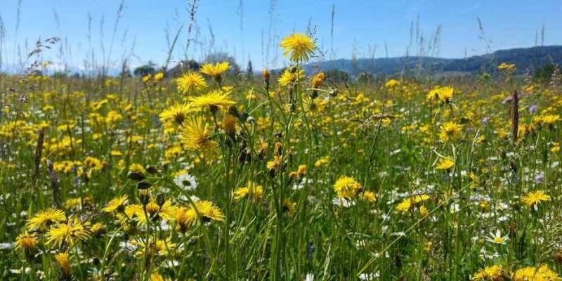 Biodiversity yields financial returns