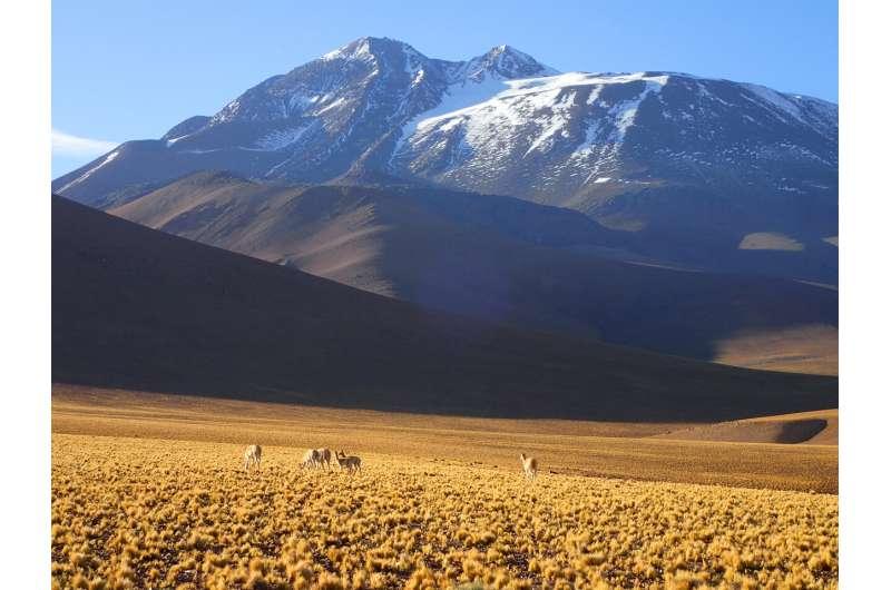 Biologist discovers world's highest-elevation mammal