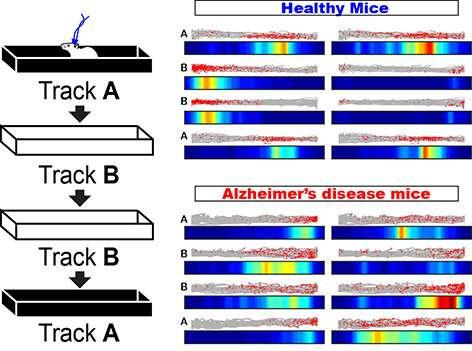 Brain network mechanism causing spatial memory impairment revealed