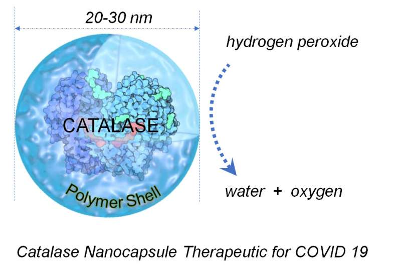 Common antioxidant enzyme may provide potential treatment for COVID-19