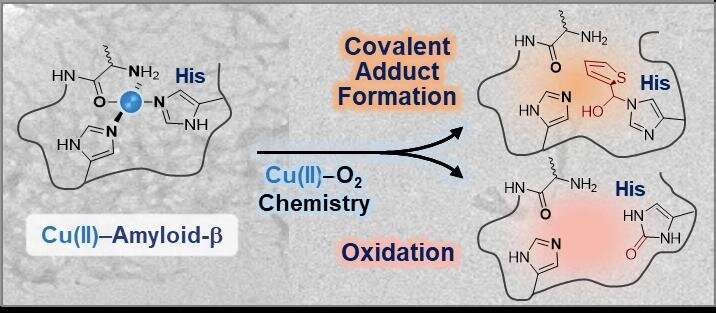 Coordination chemistry and Alzheimer's disease