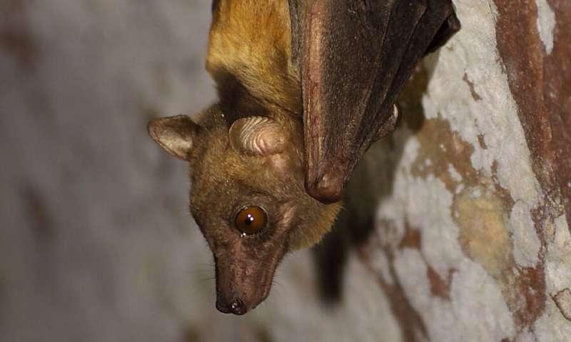 Coronavirus outbreak raises question: Why are bat viruses so deadly?