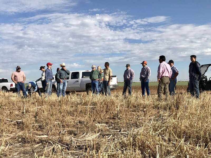 Cover crops can benefit hot, dry soils