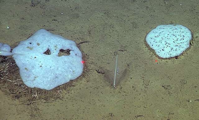 Deep-sea animal communities can change dramatically and erratically over time