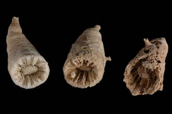 Deep sea coral time machines reveal ancient CO2 burps