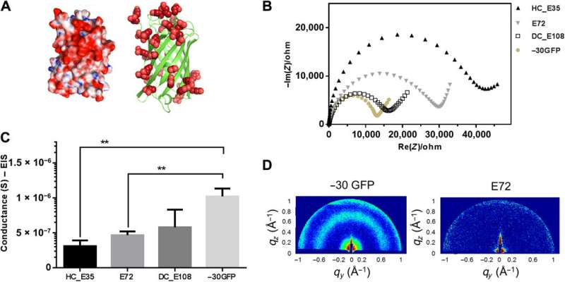 Designing a freestanding, supercharged polypeptide proton-conducting membrane