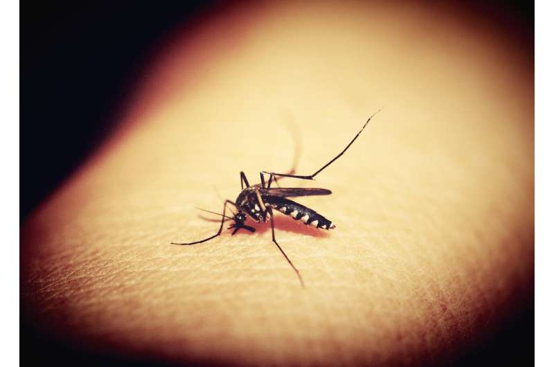 Discovery could lead to new malaria treatments