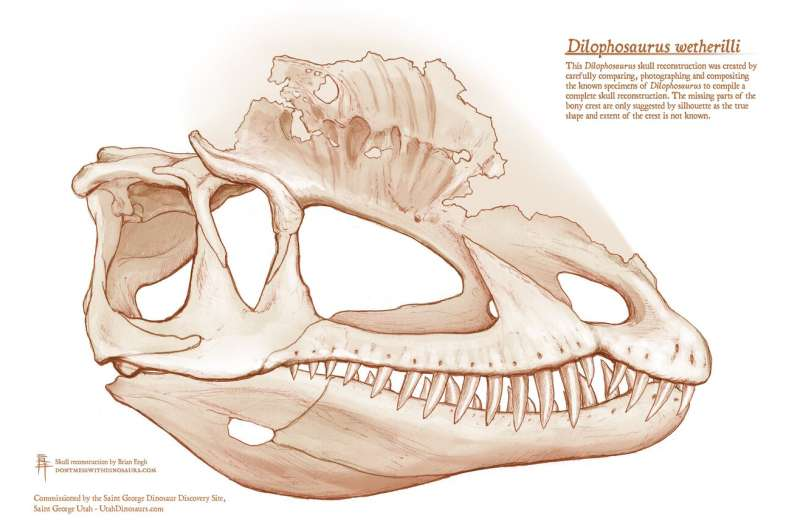 Famous 'Jurassic Park' dinosaur is less lizard, more bird