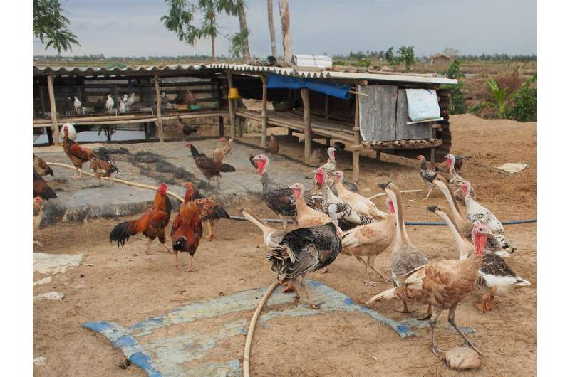 Farmers' quick sale of poultry during outbreaks may increase deadly virus transmission