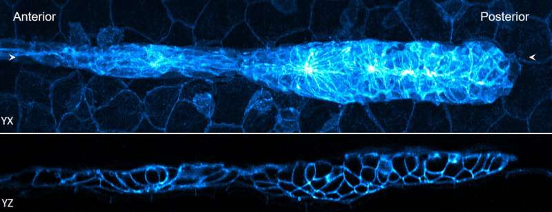 Faster processing makes cutting-edge fluorescence microscopy more accessible