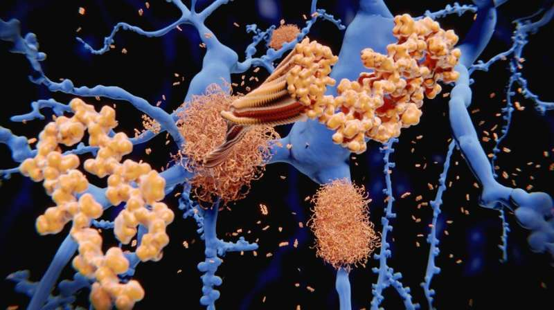 Gold nanoparticles uncover amyloid fibrils