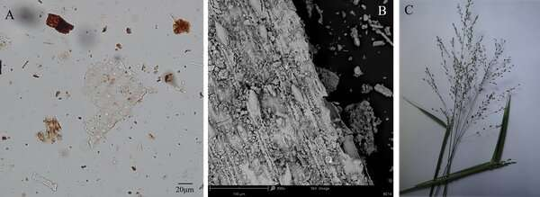 Grass on ash: uncovering 200,000 year old beds from South Africa