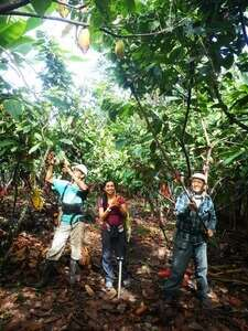 High social and ecological standards for chocolate