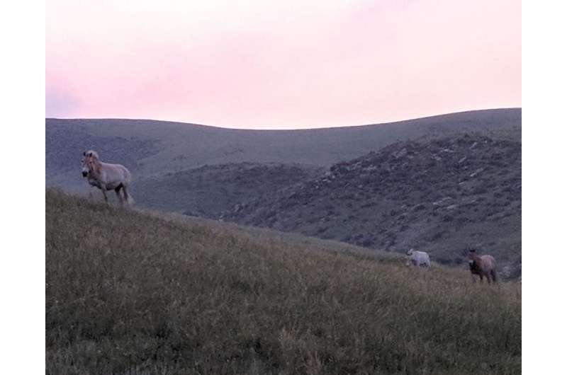 Humans domesticated horses – new tech could help archaeologists figure out where and when