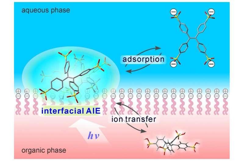 Lighting the way to selective membrane imaging
