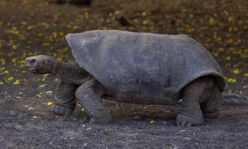 Loss of land-based vertebrates is accelerating, according to Stanford biologist and others