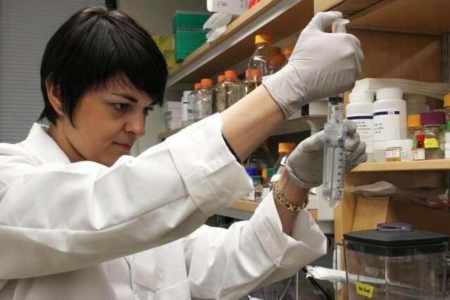 Hacer realidad un sueño biotecnológico: cultivos de cereales fijadores de nitrógeno