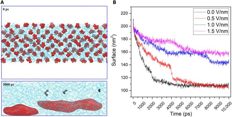 Massive generation of metastable bulk nanobubbles in water by external electric fields