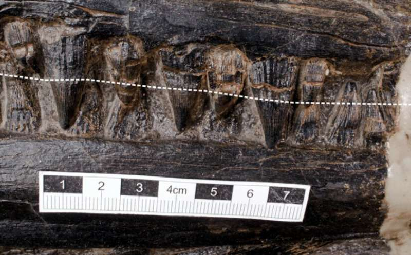 Massive, well-preserved reptile found in the belly of a prehistoric marine carnivore