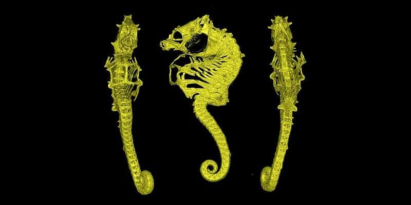 Meet Africa's first pygmy seahorse species
