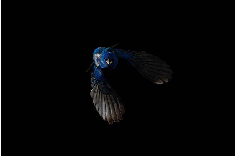 Migration and molt affect how birds change their colors