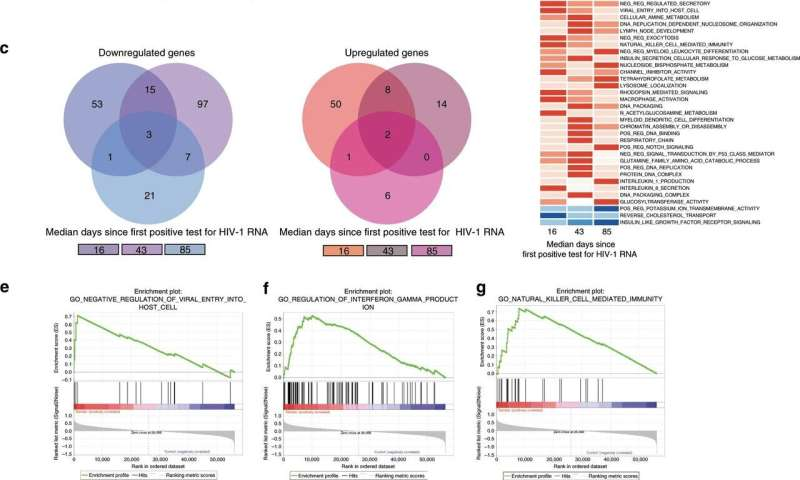 New discovery on the activity and function of MAIT cells during acute HIV infection