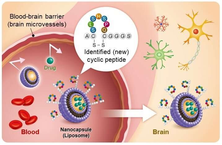 New nanocarrier drug delivery technology crosses the blood-brain barrier