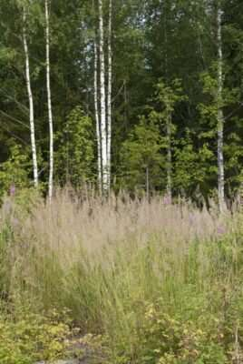 New study: Climate change will affect the abundance of common boreal plants