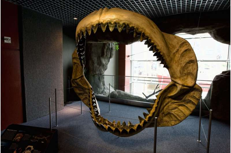 Prehistoric mega-shark raised its young in nurseries: study