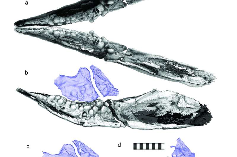 Prehistoric sea creatures evolved pebble-shaped teeth to crush shellfish