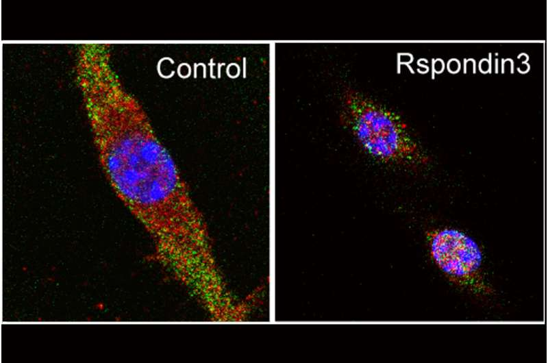 Reprogramming immune cells to reduce inflammation, promote tissue repair