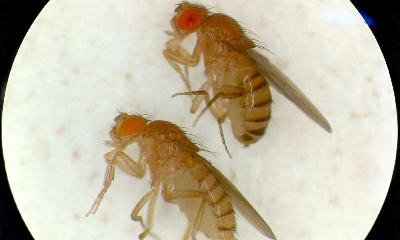 Research provides a new understanding of how a model insect species sees color