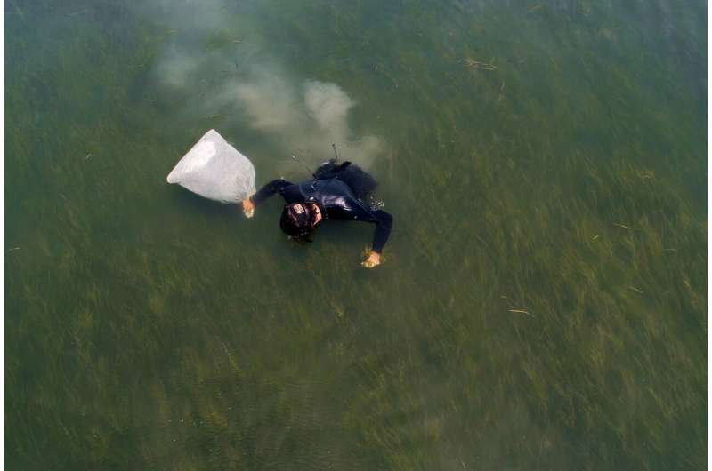Seagrass restoration speeds recovery of ecosystem services