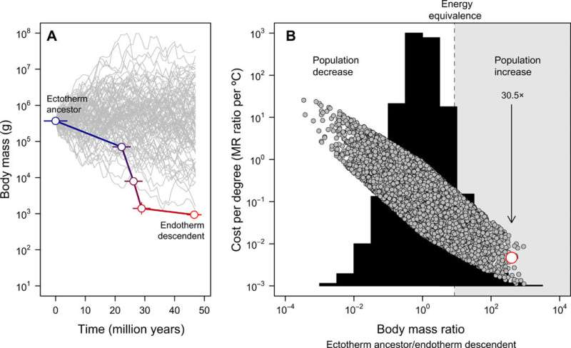 Shrinking dinosaurs and the evolution of endothermy in birds