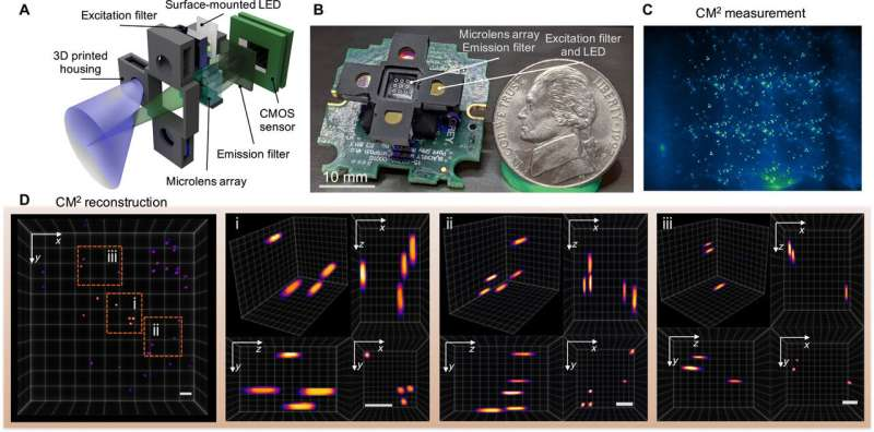 Single-shot 3D wide-field fluorescence imaging with a Computational Miniature Mesoscope