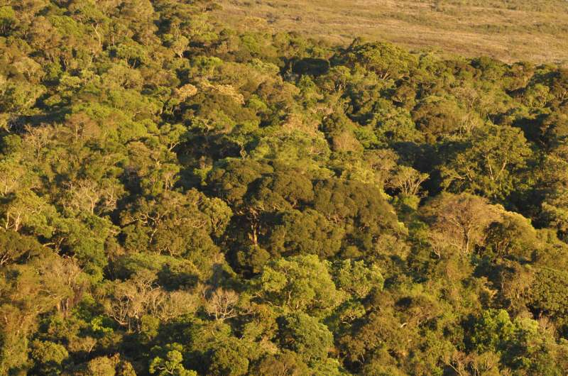 Some Brazilian forests found to already be transitioning from carbon sinks to carbon sources
