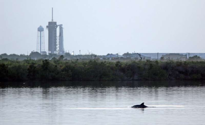 SpaceX's Falcon 9 rocket in the background as dolphins swim in a lagoon near Launch Pad 39A at the Kennedy Space Center in Flori