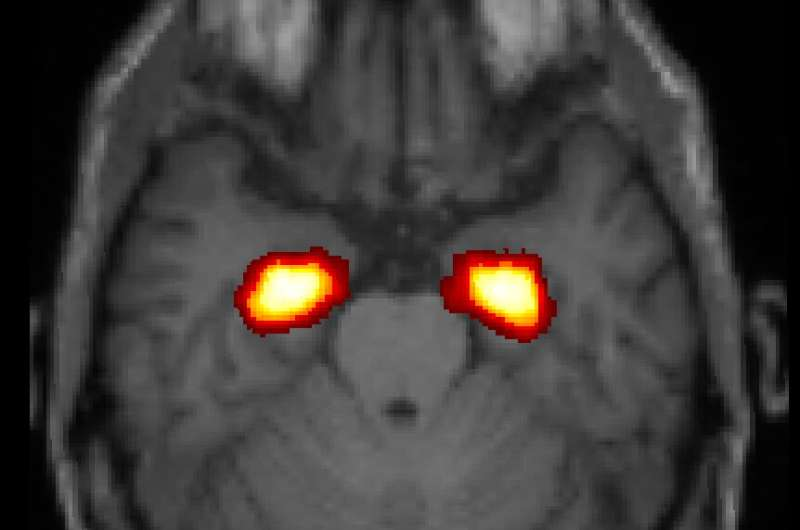 Study links physical stress on the job with brain and memory decline in older age