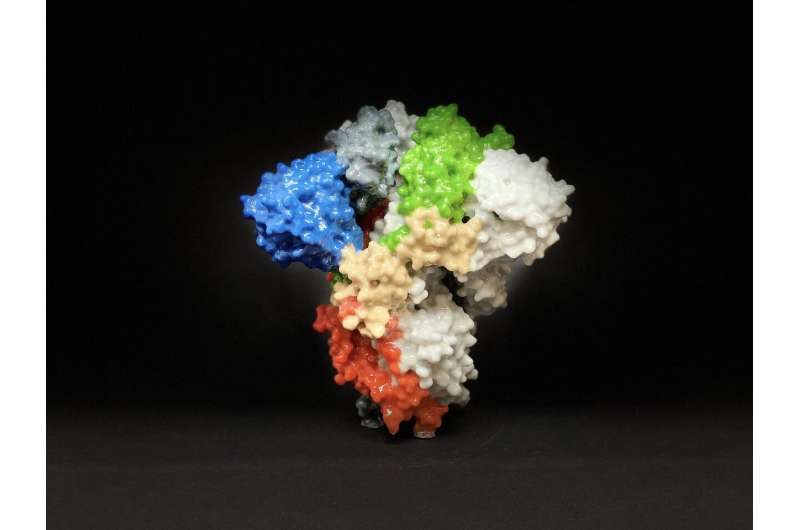 Successful MERS vaccine in mice may hold promise for COVID-19 vaccine