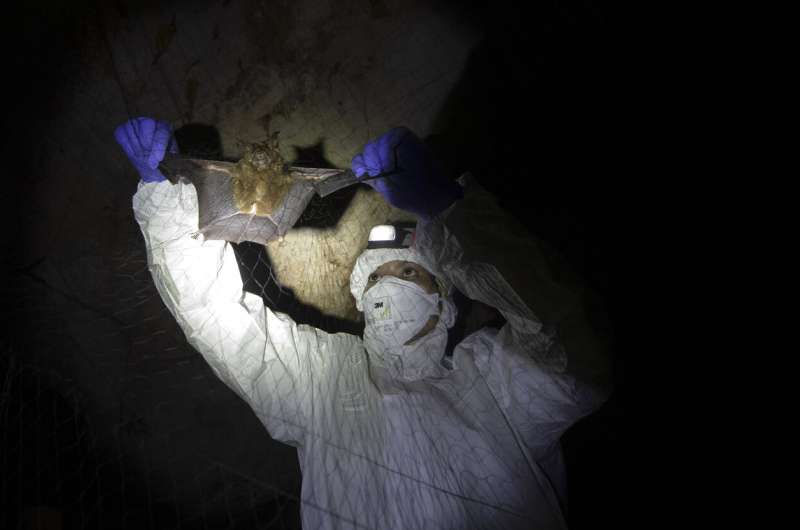 Thai scientists catch bats to trace virus origins