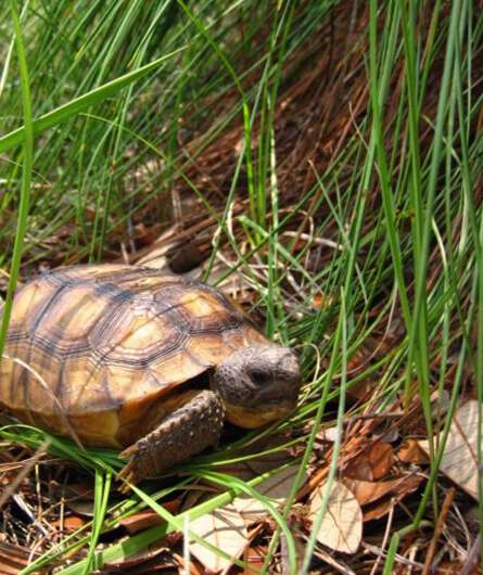 Tortoise relocation proves to be effective for conservation