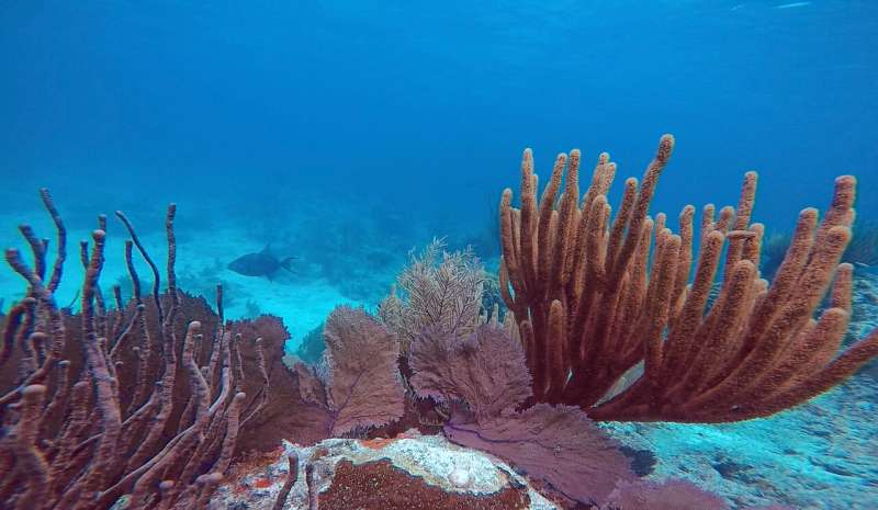 Warmer, acidifying ocean brings extinction for reef-building corals, renewal for relatives