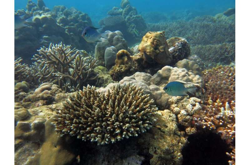 Warming climate undoes decades of knowledge of marine protected areas
