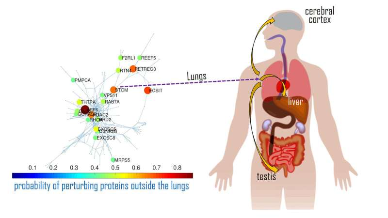 Why does COVID-19 impact only some organs, not others?