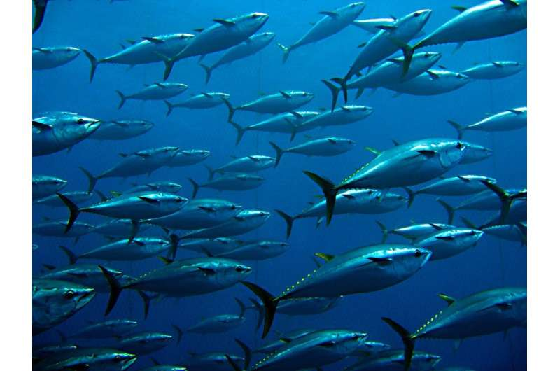 Why marine protected areas are often not where they should be