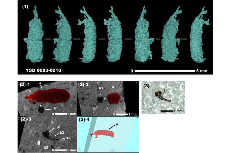 X-ray imaging of a beetle's world in ancient earthenware