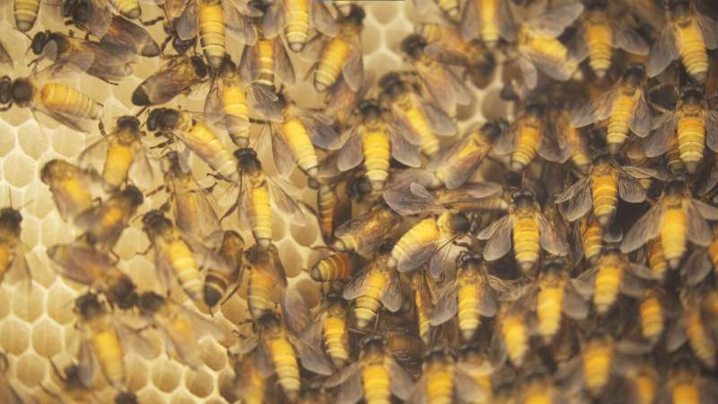 Air pollution impacts the health of wild pollinators