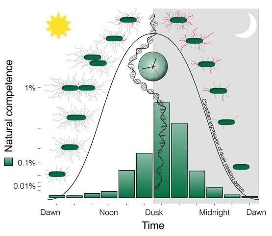 Researchers uncover importance of aligning biological clock with day-night cycles